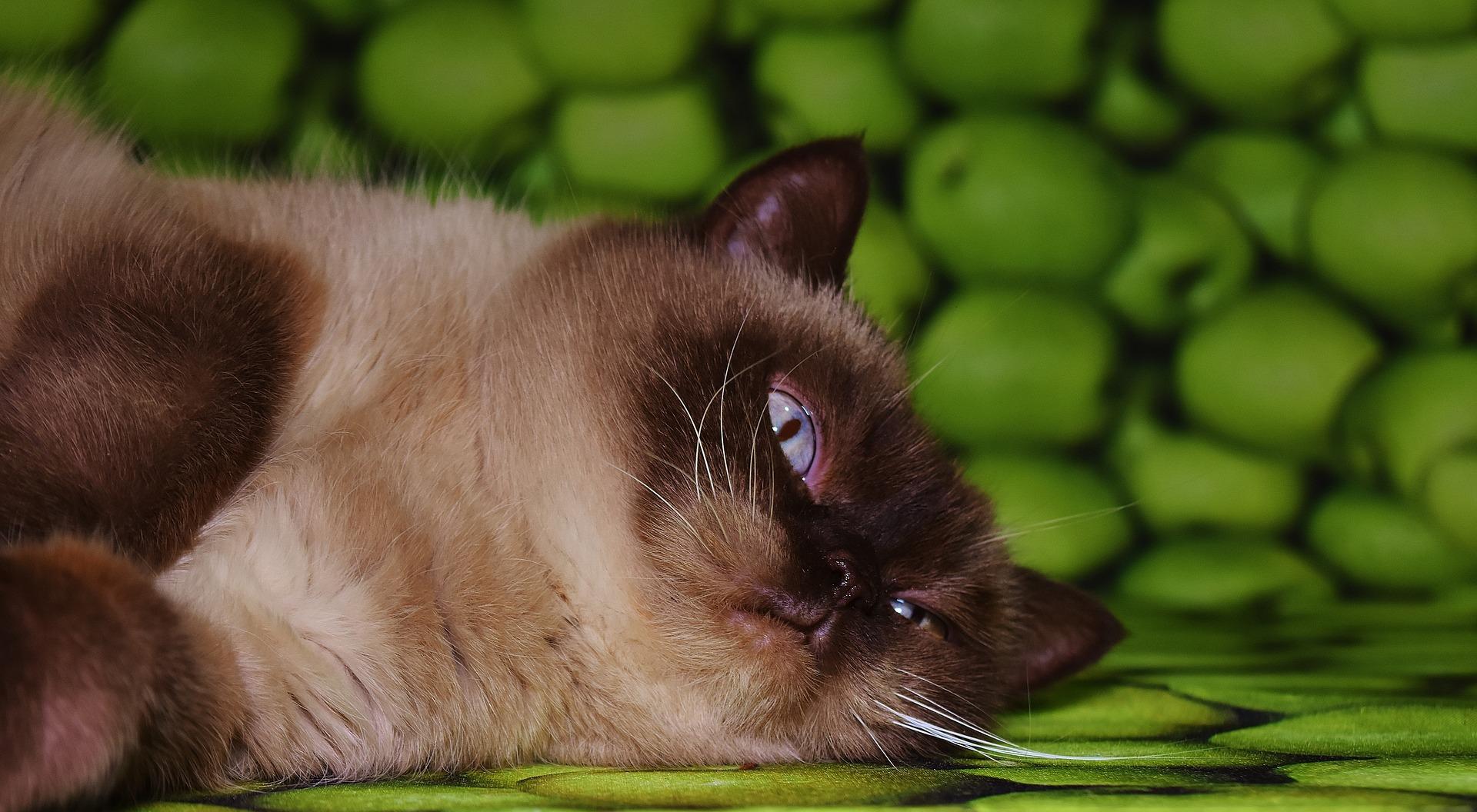 cat-2022264_1920